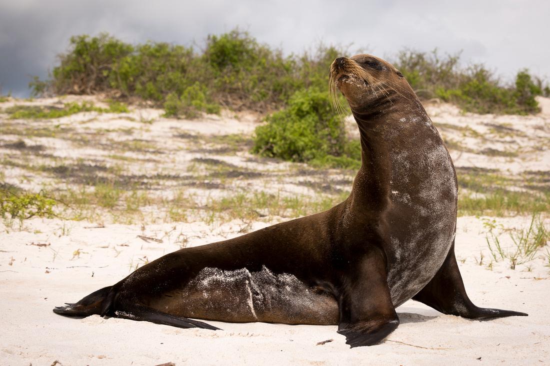 Galapagos (4 of 43)