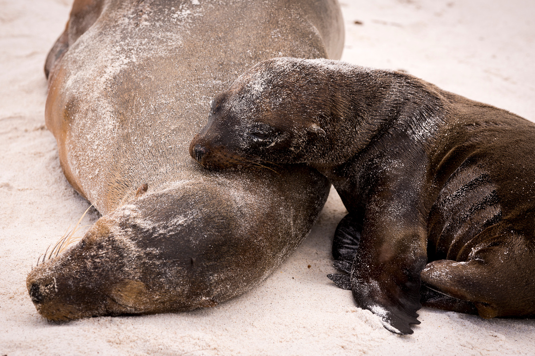 Galapagos (5 of 43)