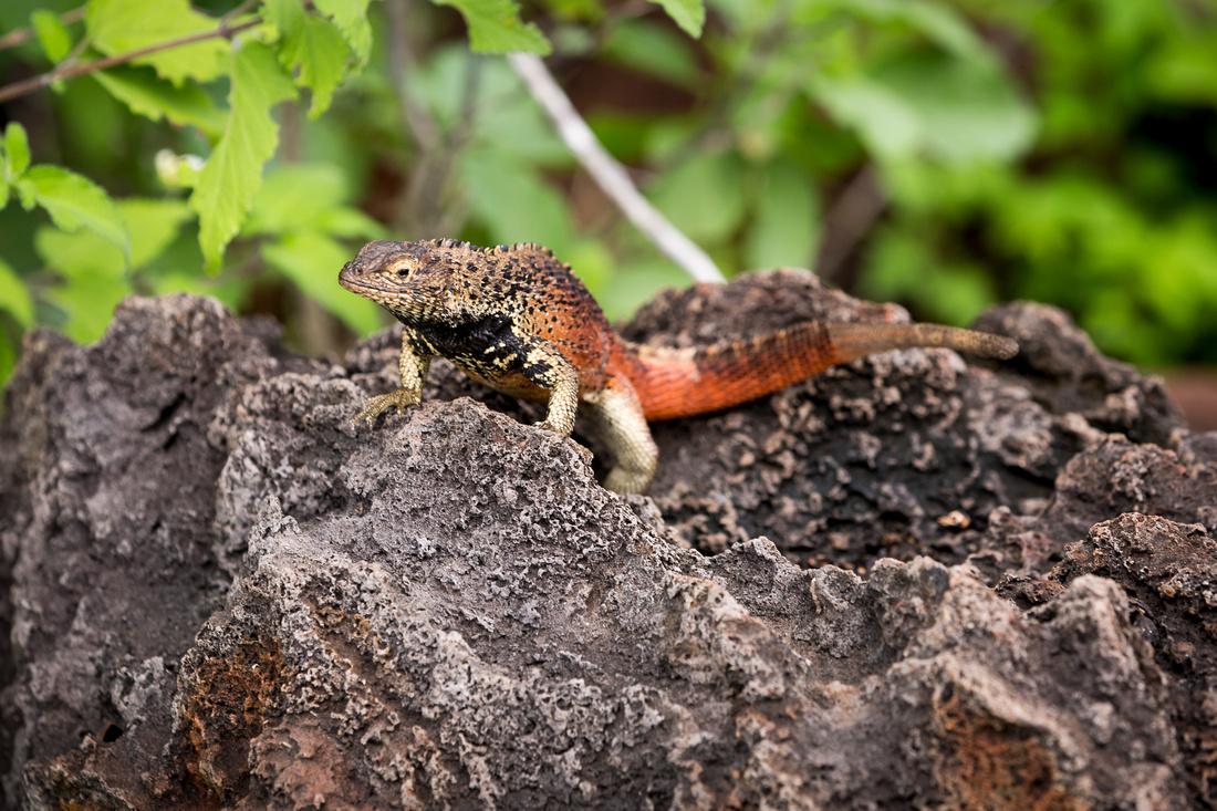 Galapagos (6 of 43)