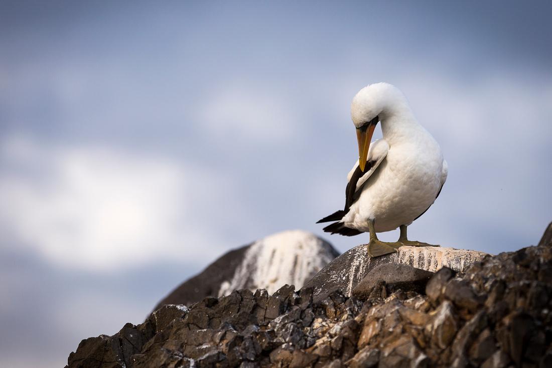 Galapagos (11 of 43)