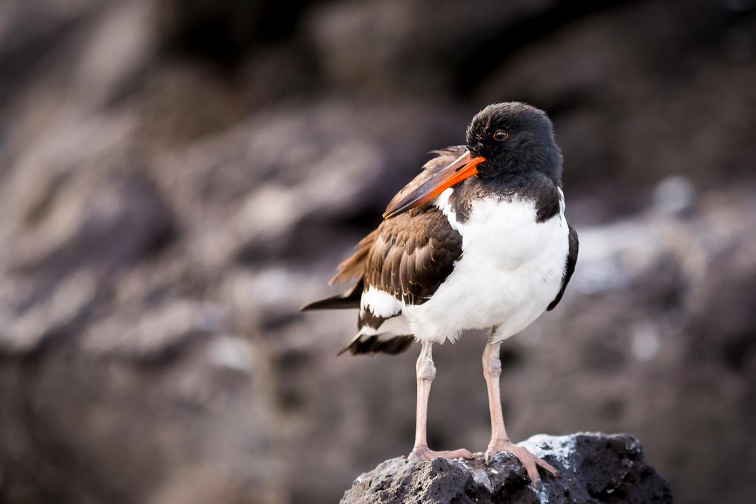Galapagos (12 of 43)