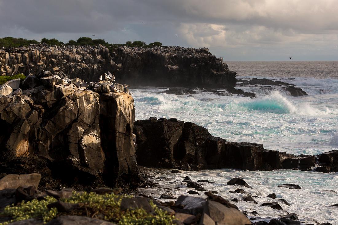 Galapagos (14 of 43)