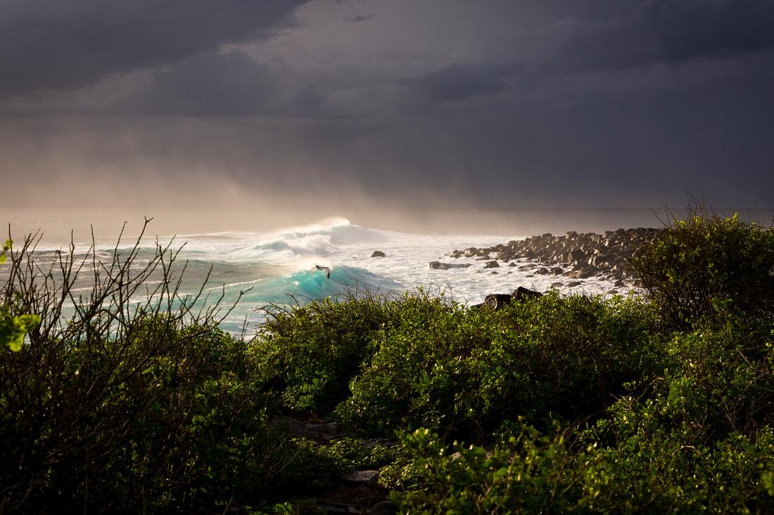 Galapagos (15 of 43)
