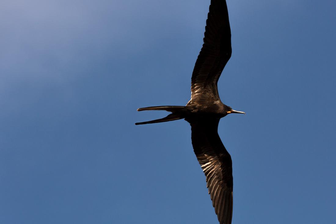 Galapagos (19 of 43)
