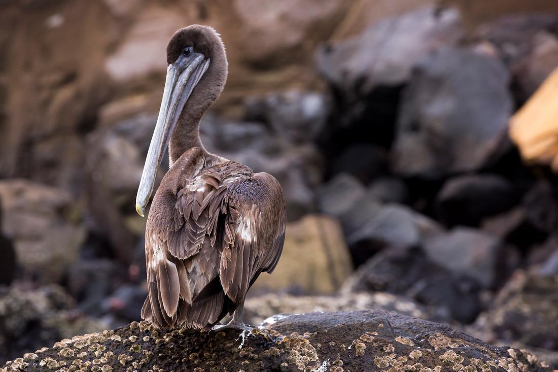 Galapagos (29 of 43)