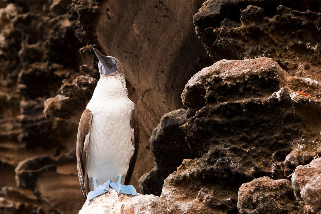 Galapagos (31 of 43)